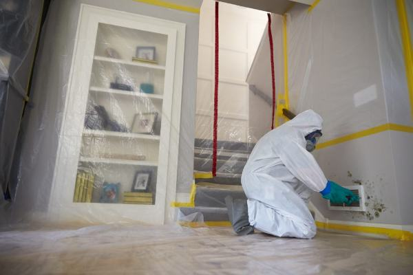 mold removal services, mold remediation company